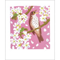 Carry Akroyd Song Thrush Greetings Card CA3028